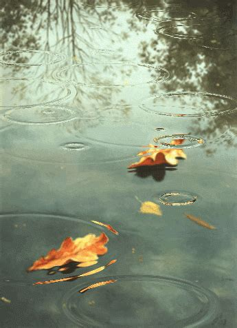 Raindrops In Autumn Pictures, Photos, and Images for