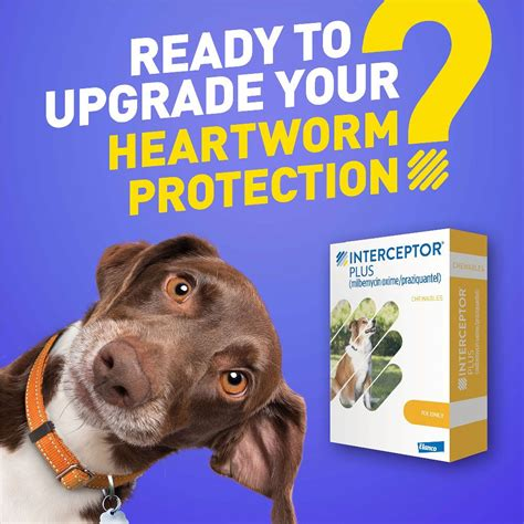 Save On Interceptor Plus for Dogs 8
