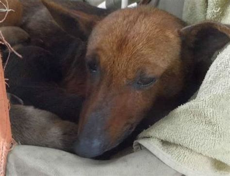 Mutt Becomes Abandoned Baby's Surrogate Mother and Saves