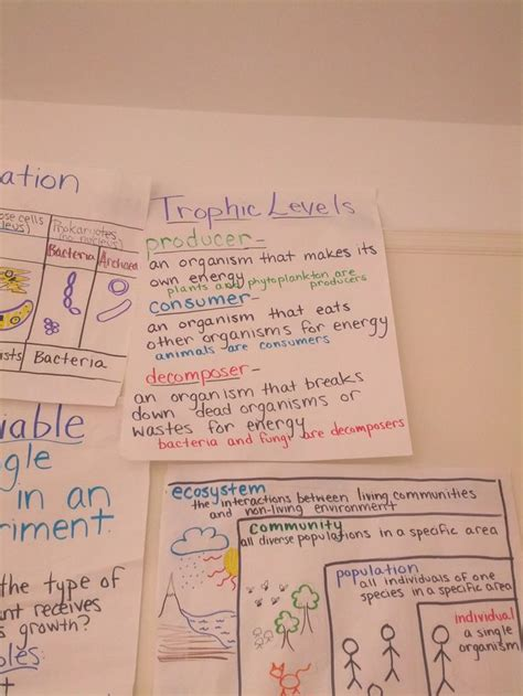 producer, consumer, decomposer anchor chart with