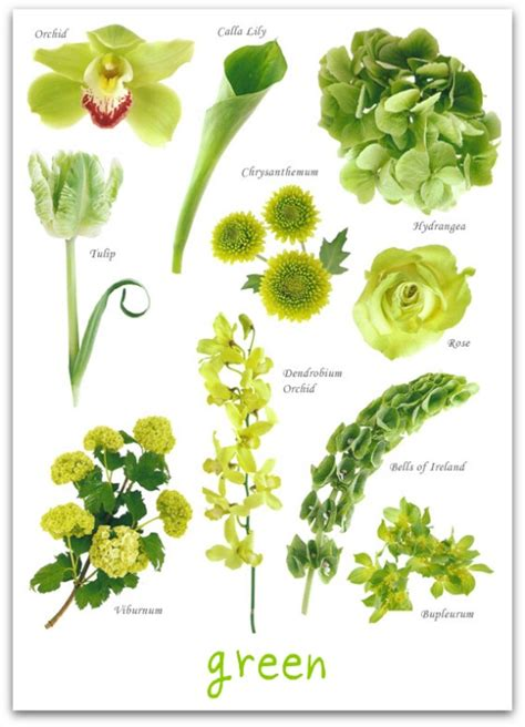 A Glossary of Flowers | The Peak Xperience