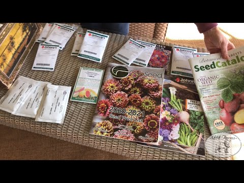 """Squash Seeds - """"Cocozelle"""""""