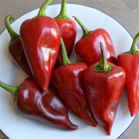 Sweet Pepper Seeds - Piquillo   Vegetable Seeds in Packets