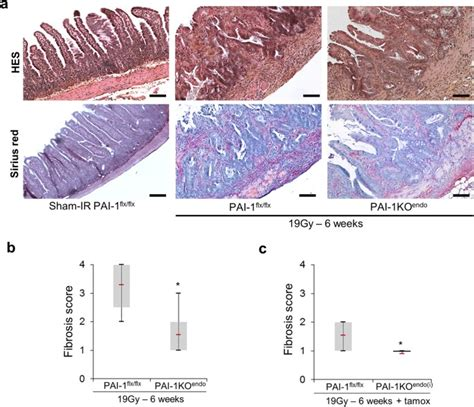In vivo evidence for an endothelium-dependent mechanism in