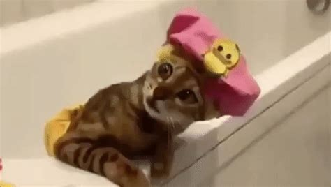 GIF relax relaxing cute - animated GIF on GIFER - by Delarin