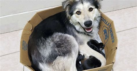 Dog Mom And Her 9 Puppies Found Abandoned And Sealed In A