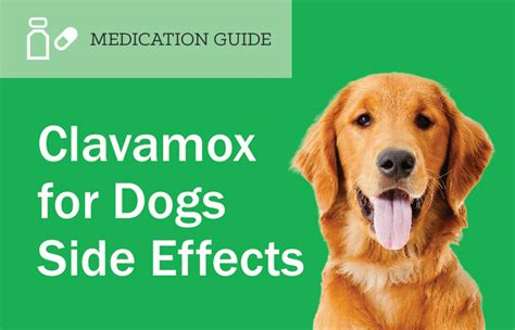 Clavamox For Dogs Side Effects